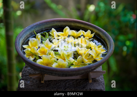 Frangipani flower bowl in the resort spa - Bali, Indonesia - Stock Photo