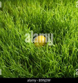 colored Easter egg hidden in grass - Stock Photo