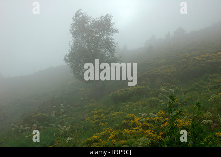 Birch lonely fog Tree Foggy Mist Misty travel Peace peaceful tranquil tranquillity calm silhouette quiet isolated - Stock Photo