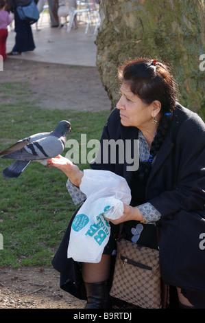 Mature senior Turkish woman feeding the pigeons in Finsbury Park North London UK - Stock Photo