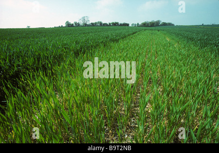 wheat crop experiment Note number: ag0548 published: july 1996 updated: july 2012 wheat is the most important cereal grain in world commerce the framework for all winter crop production.