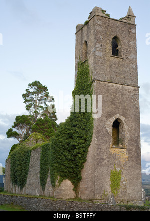 Kenmare Abbey Overgrown. Vines and trees grow profusely over and in this now abandoned Abbey church. - Stock Photo