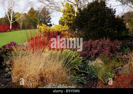 A WINTER BORDER WITH COLOURFUL CORNUS DOGWOODS AND OTHER SHRUBS. RHS HYDE HALL ESSEX UK - Stock Photo