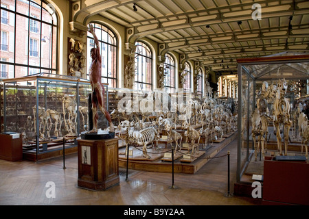 Museum of Natural History in Paris, France - Stock Photo