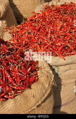 Sacks of red chillies in Bhopal's daily market, Bhopal, India - Stock Photo