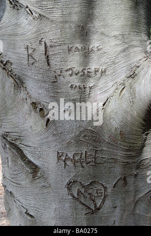 Names and initials etched into the smooth bark of a Beech Tree - Stock Photo