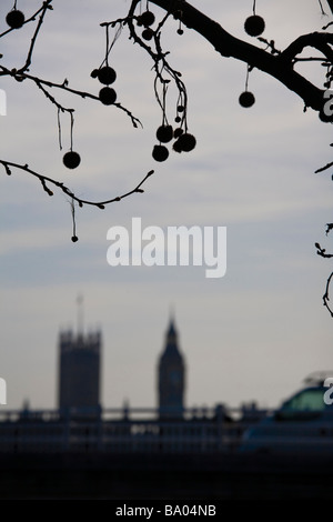 View through London Plane tree of  Waterloo Bridge and Houses of Parliament, Westminster, London - Stock Photo