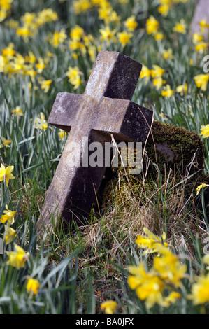 Fallen stone memorial cross with daffodils. Saint Mary's Churchyard, Kirkby Lonsdale, Cumbria, England, United Kingdom, - Stock Photo