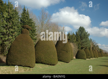 Clipsham Yew Tree Avenue, Rutland, England, UK - Stock Photo