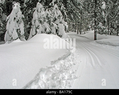 Machine made ski-track in fir-tree forest with plenty of snow, Austria, Achenkirch, near Innsbruck. - Stock Photo