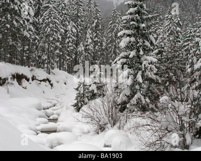 Frozen stream in Fir-tree forest with plenty of snow and deep snowdrifts, winter Austria, Achenkirch, near Innsbruck. - Stock Photo