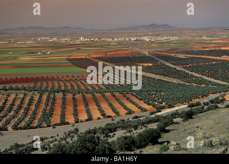 Olive groves near Orgaz seen from Sierra de los Yebenes Castilla La Mancha Spain - Stock Photo