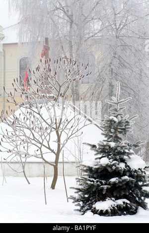 Rime covered trees in the winter city square (frosty misty morning) - Stock Photo