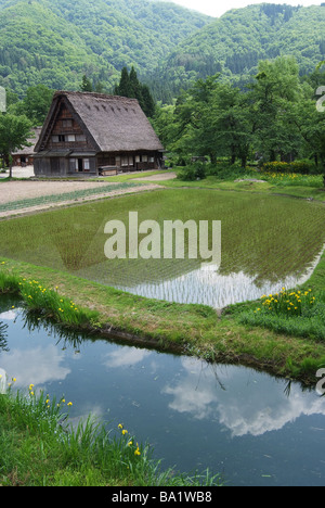 View of Japanese Style Home with Rice Paddy in Shirakawa in Japan, Gifu Prefecture - Stock Photo