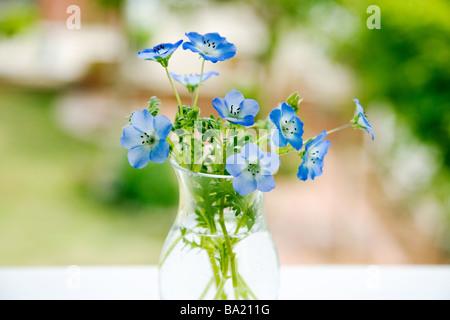Nemophila Flowers Vase in Garden - Stock Photo