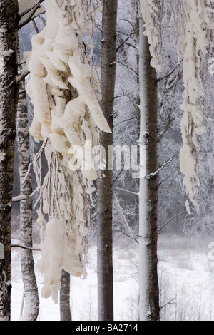 Trees covered with ice crust. - Stock Photo