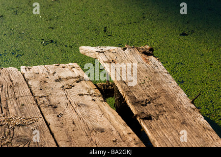 Old gangway over swamp surface. - Stock Photo