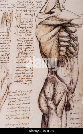 Anatomical Studies of the Muscles of the Torso and Leg by Leonardo ...