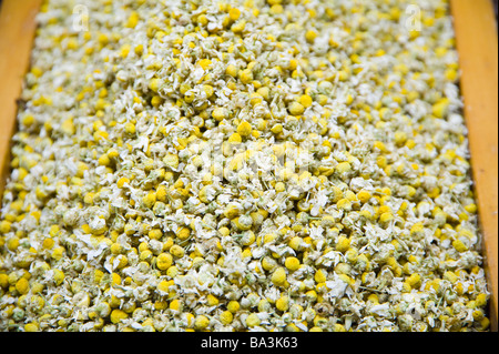 Dried chamomile (bot., Chamaemelum nobilis) - Stock Photo