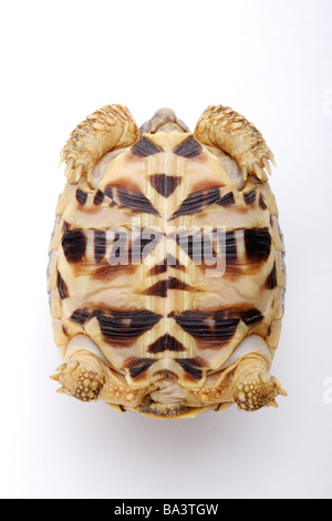 Turtle upside down close up overhead view - Stock Photo
