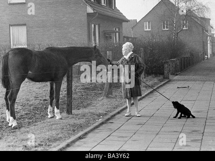 Seventies, black and white photo, humour, animals, woman walks a dog on a lead and stands near a pasture fence petting - Stock Photo