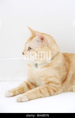 Side view of a cat lying - Stock Photo