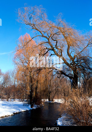 An arm from the Isar River and Willow Tree during Winter English Garden Munich Bavaria Germany - Stock Photo