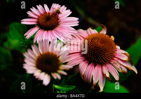 Tropical, wild, and perennial flowers showing assorted colors. - Stock Photo