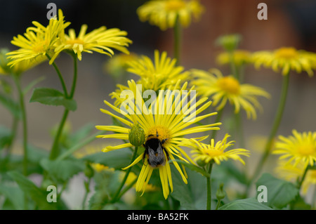 Bee on a yellow flower - Stock Photo