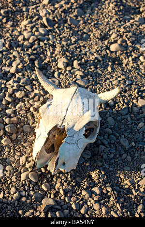 Cow skull on riverbank - Stock Photo