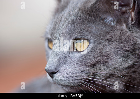 Observant cat watches the grass for prey. - Stock Photo