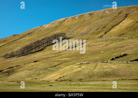 Barn and Dry Stone Walls on hill side, Hawes, Yorkshire Dales National Park, North Yorkshire, England, UK. Brighht - Stock Photo