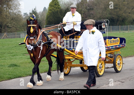 Man leading a brown stallion pulling a cart at the London Harness Horse Parade - Stock Photo