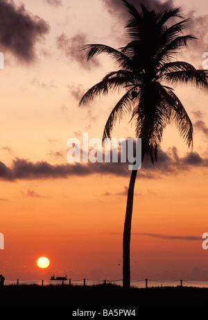 Palm tree on beach, Miami, Florida - Stock Photo