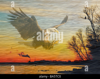 A Bald Eagle soars over the Mississippi River at sunset. - Stock Photo