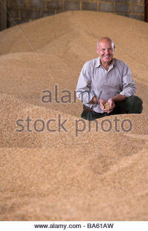 Portrait of smiling farmer cupping wheat grains on grain heap - Stock Photo