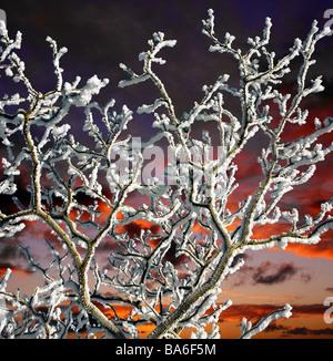 Snow on trees with sunset, Reykjavik Iceland - Stock Photo