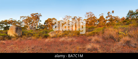 Eucalyptus trees and bushland growing on the granite escarpments of John Forrest National Park. Perth, Western Australia - Stock Photo