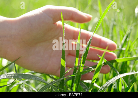 Grass and hand - Stock Photo