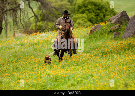 Cowboy and Herding Dog on the way Home, California - Stock Photo