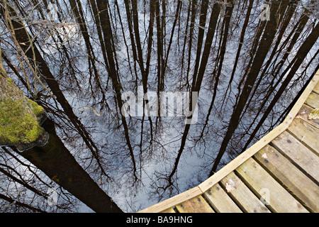 Black alder tree trunks reflected in Versupite river floodplain forest in Kemeru National Park Latvia - Stock Photo