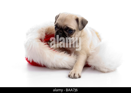 puppy sitting on christmas hat - Stock Photo