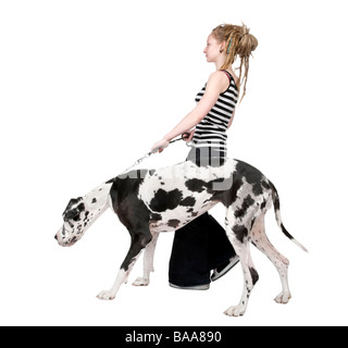 young girl walking her dog Great dane 4 years harlequin Great Dane in front of a white background - Stock Photo