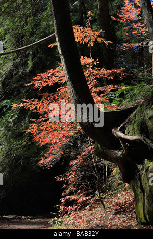 View of fall forest path in town park Hocking Hills Ohio USA nobody not no people isolated from above top view - Stock Photo