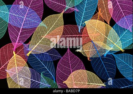 Coloured skeleton leaves pattern on black background - Stock Photo