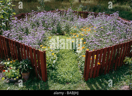Plants with flowers in garden - Stock Photo