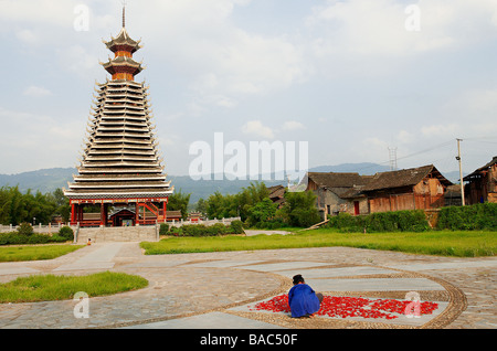 China, Guizhou Province, Rongjiang, woman drying red hot chili pepers, Dong Drum Tower in the background - Stock Photo