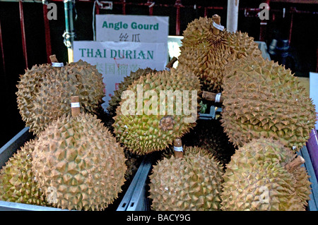 The durian is the fruit of several tree species belonging to the genus Durio and the Malvaceae family. - Stock Photo