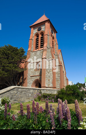 Christ Church Cathedral and Lupins. Stanley, Falkland Islands. - Stock Photo