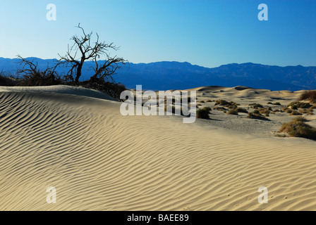 Dead trees on sand dunes in Death Valley, California - Stock Photo
